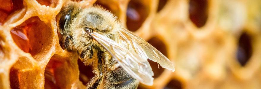Trésors de la ruche